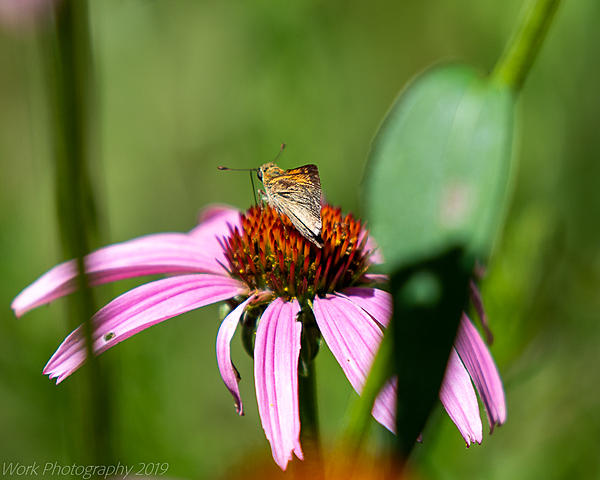 Post your Moths & Butterflies-cove-springs-5273.jpg