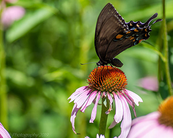 Post your Moths & Butterflies-cove-springs-5307.jpg