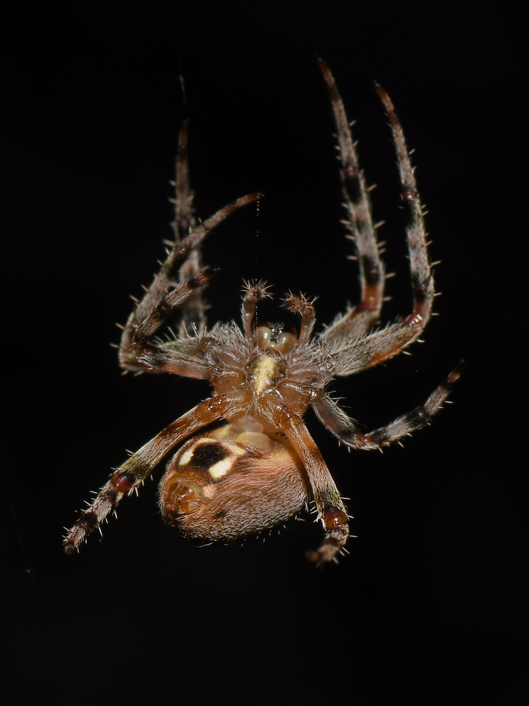 Post your spiders-spider3.jpg
