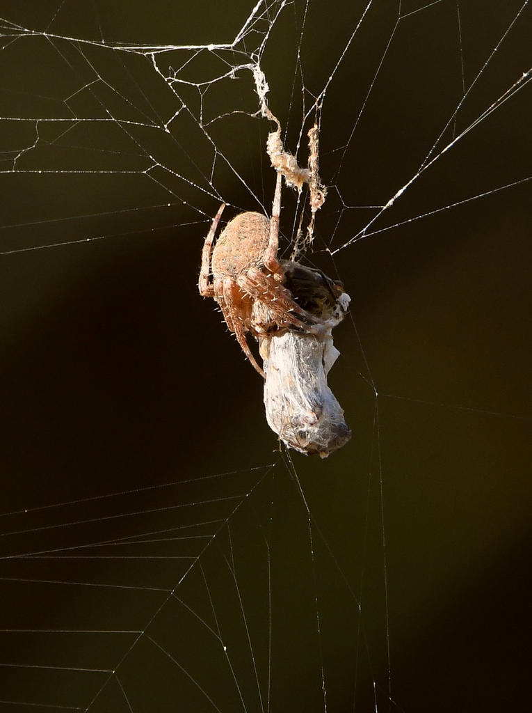 Post your spiders-spider.jpg