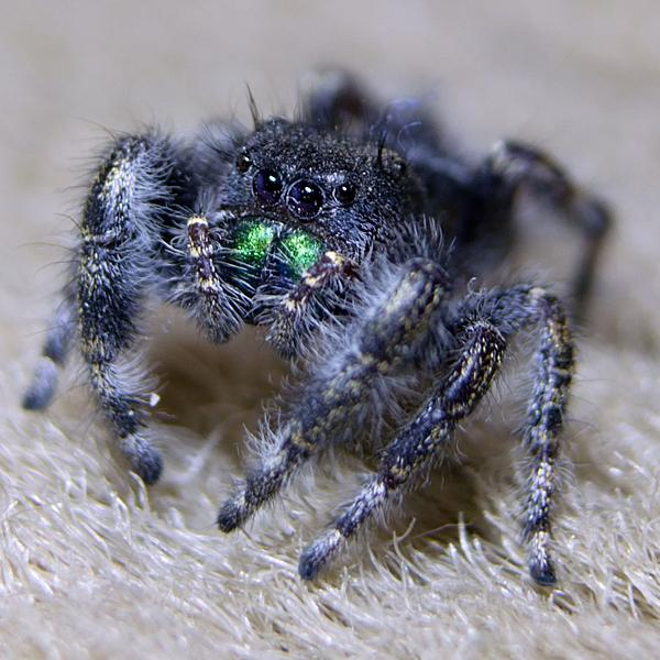 Post your spiders-zsc_9861n.jpg