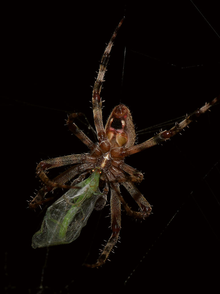 Post your spiders-spider4.jpg