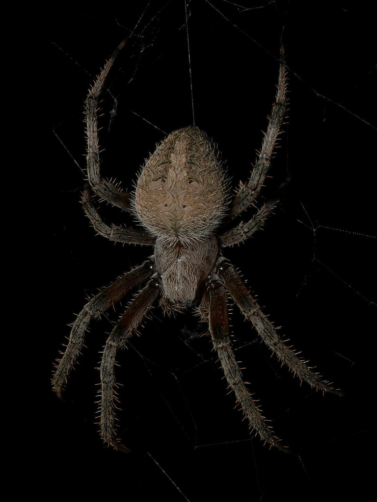Post your spiders-spider2.jpg