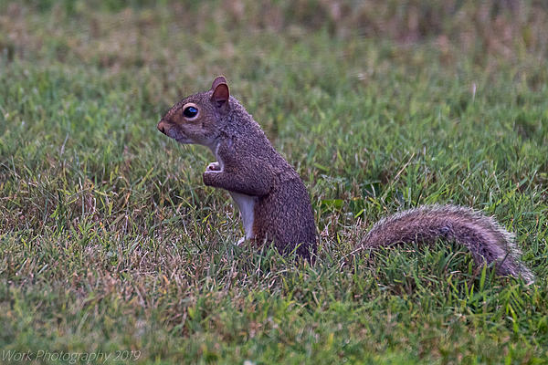 Post your Squirrel pictures-untitled-shoot-5885.jpg