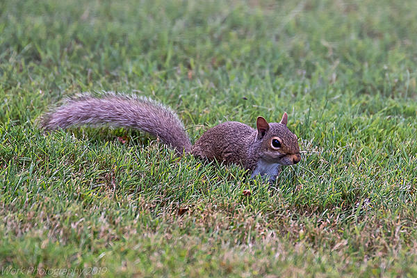 Post your Squirrel pictures-untitled-shoot-5886.jpg