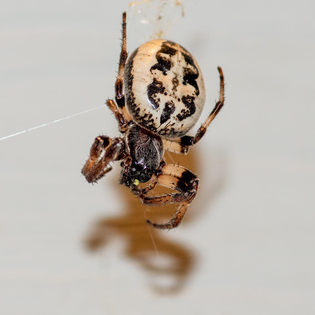 Post your spiders-untitled-8067.jpg