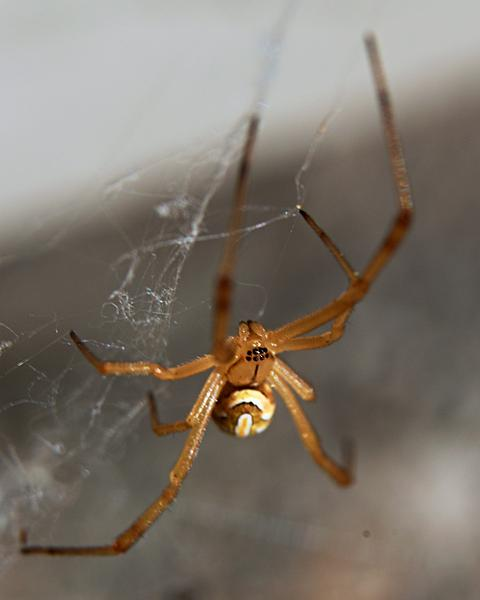 Post your spiders-zsc_9979_4x5n.jpg