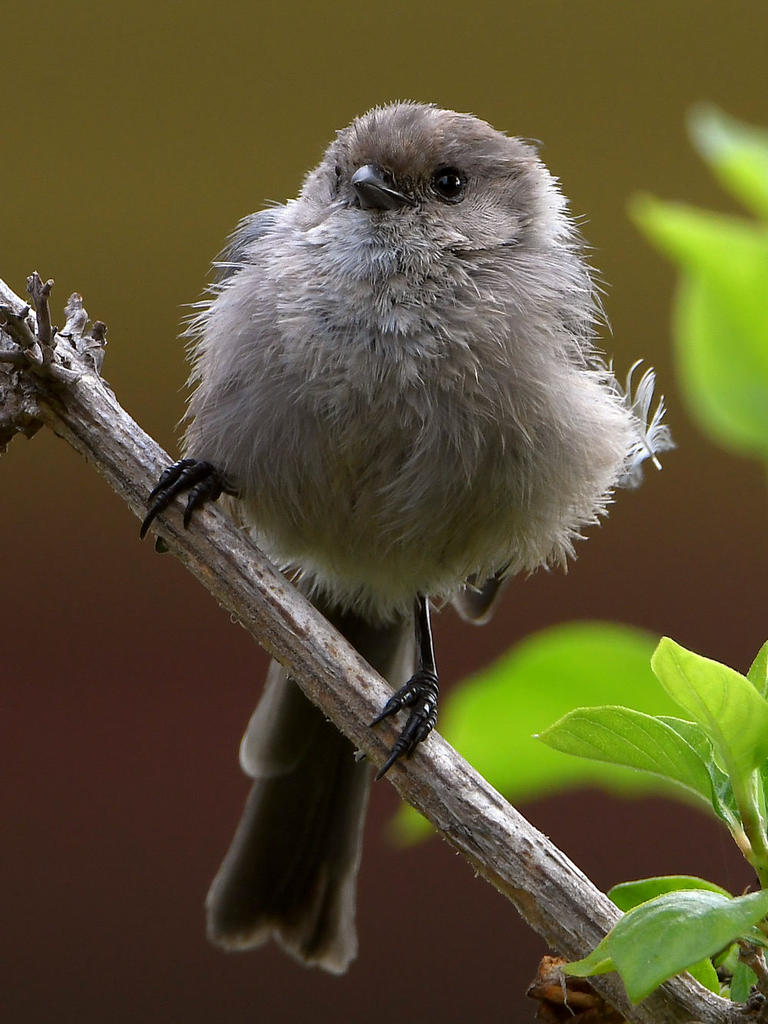 Post your birds (2)-tit.jpg