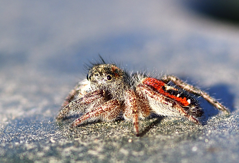 Post your spiders-_roy2670.jpg