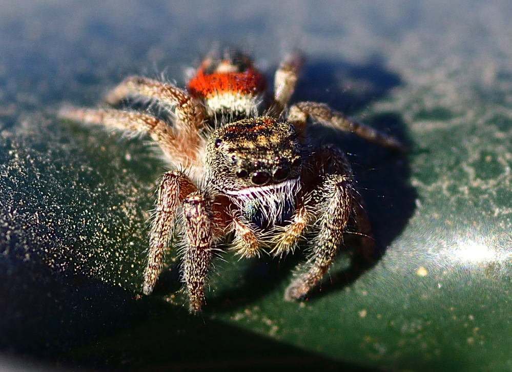 Post your spiders-_roy2678.jpg