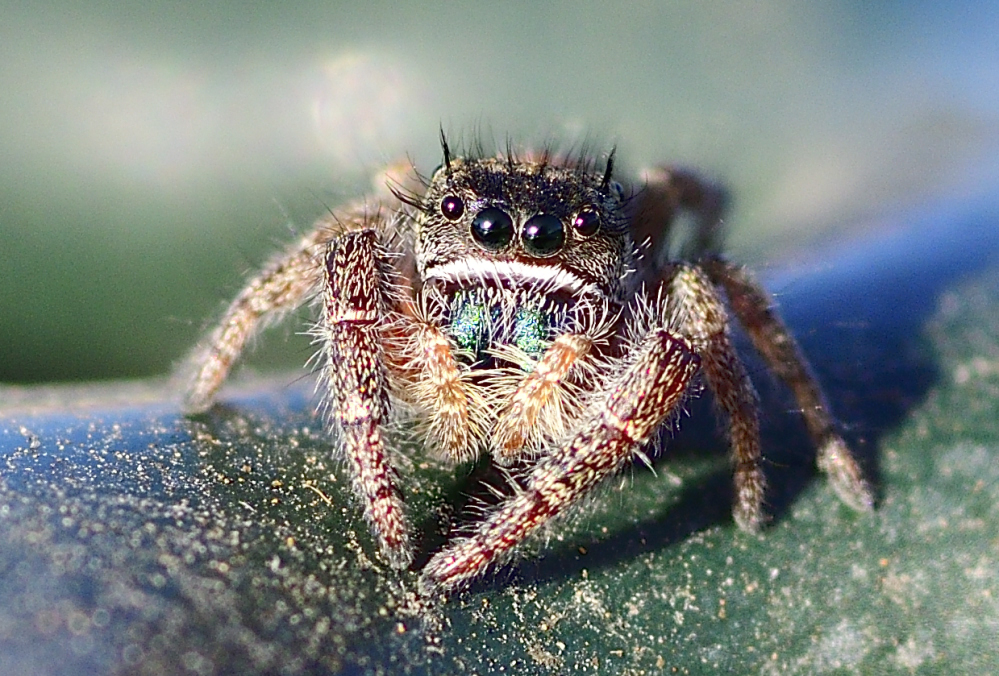 Post your spiders-_roy2684.jpg