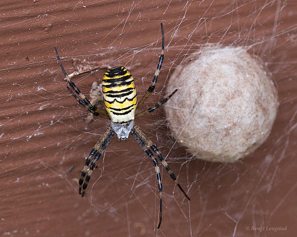 Post your spiders-d810-8312_2.jpg