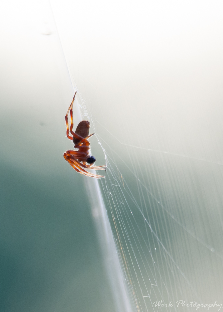 Post your spiders-spring-mill-1009.jpg