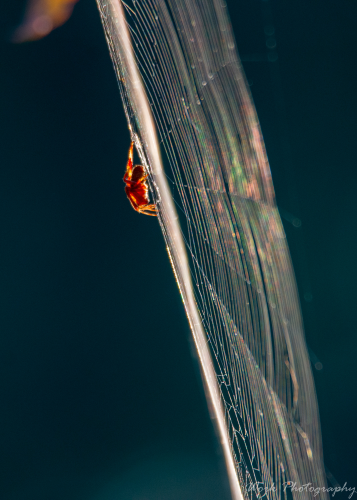 Post your spiders-spring-mill-1016.jpg