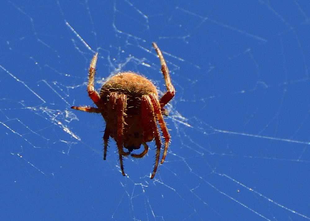 Post your spiders-_roy2854.jpg