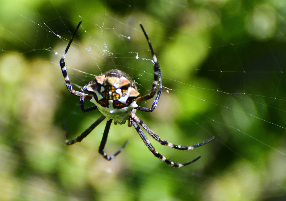 Post your spiders-_roy2859.jpg