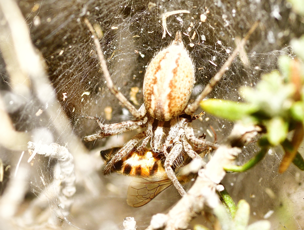 Post your spiders-_roy2874.jpg