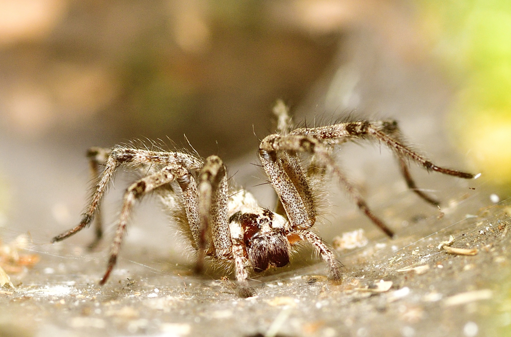 Post your spiders-_roy2876.jpg