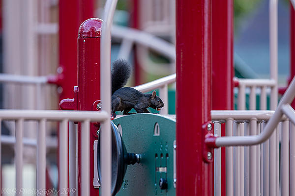 Post your Squirrel pictures-cleveland-9042.jpg