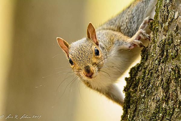Post your Squirrel pictures-20190928-_d719799.jpg