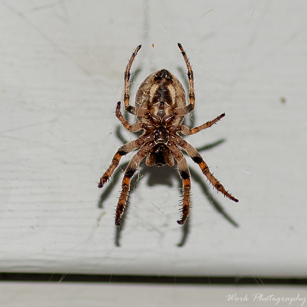 Post your spiders-lauras-family-9247.jpg