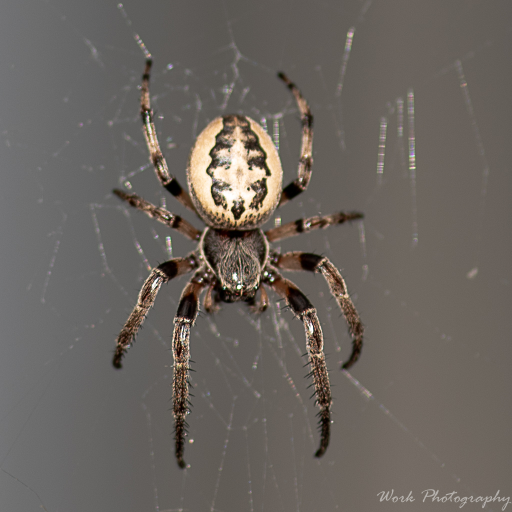 Post your spiders-lauras-family-9251.jpg
