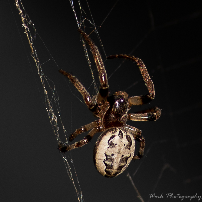 Post your spiders-lauras-family-9256.jpg