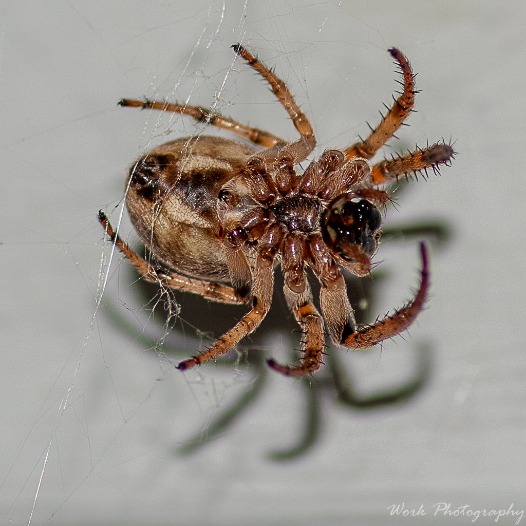 Post your spiders-lauras-family-9258.jpg