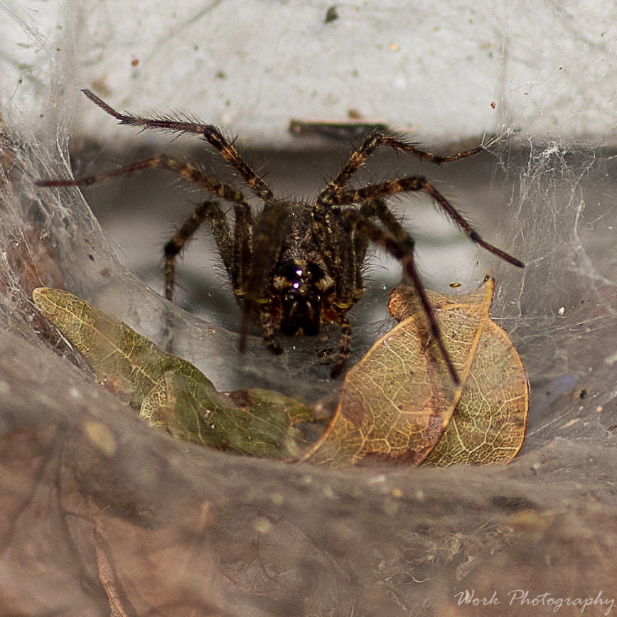Post your spiders-lauras-family-9249.jpg