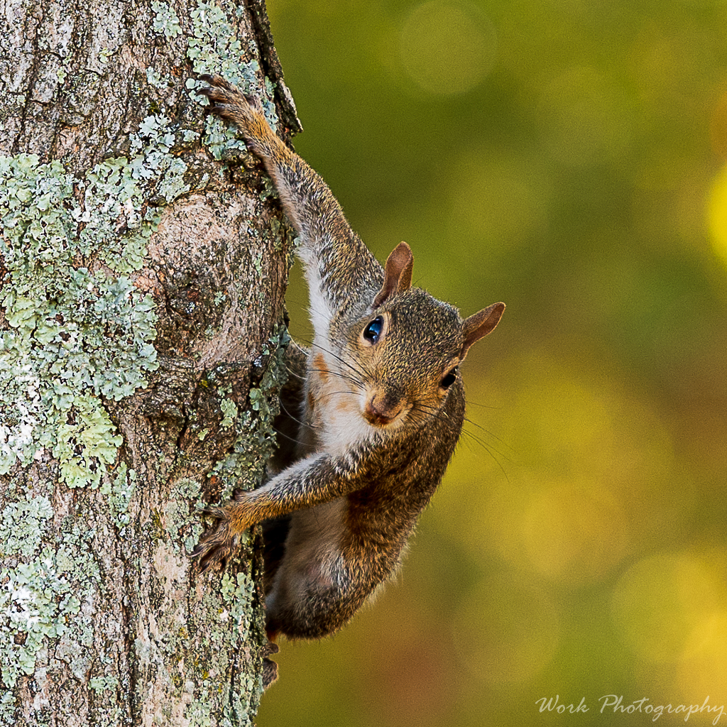 Post your Squirrel pictures-backyard-0599.jpg