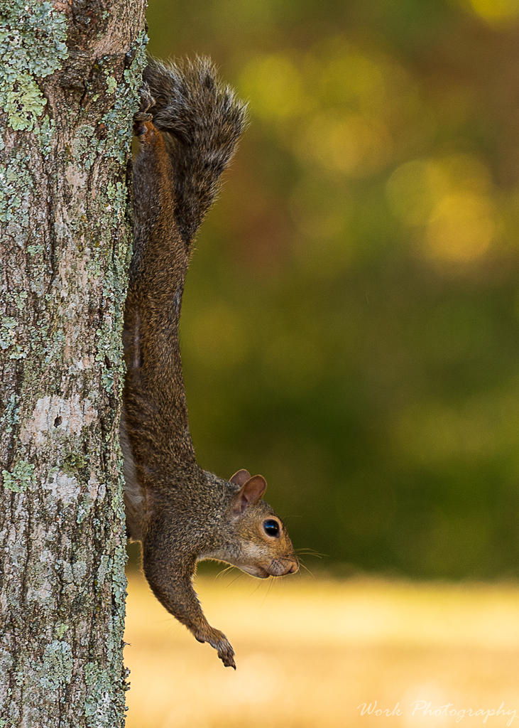 Post your Squirrel pictures-backyard-0600.jpg