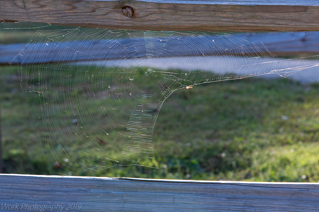 Post your spiders-untitled-shoot-6958.jpg