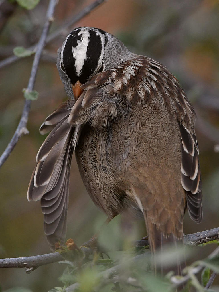 Post your birds (2)-sparrow6.jpg