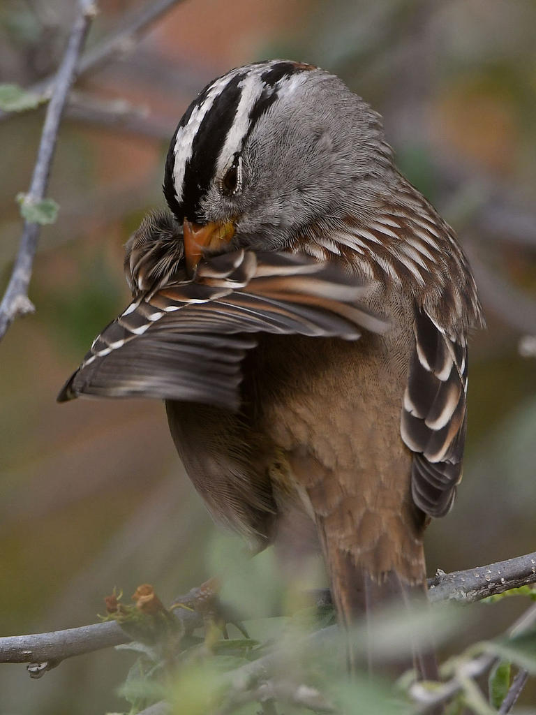 Post your birds (2)-sparrow8.jpg