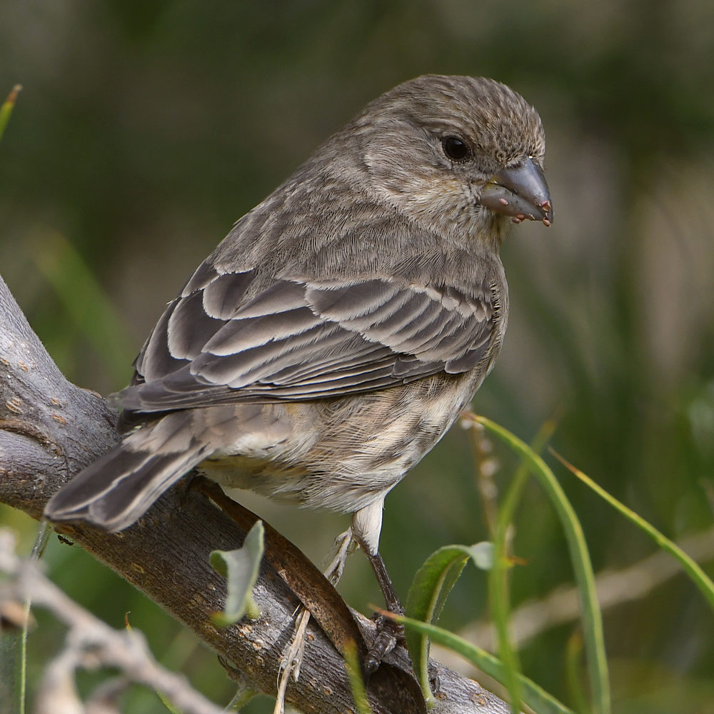 Post your birds (2)-finch3.jpg