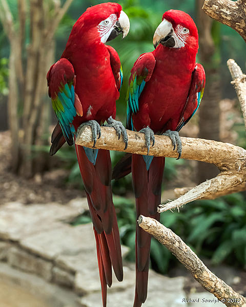 Polly wants a Picture - Post your Parrot Pics-dcs_6572.jpg