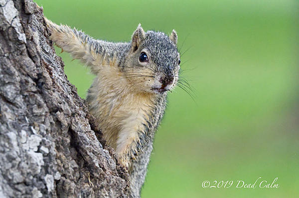 Post your Squirrel pictures-squirrel-n-500_0678.jpg