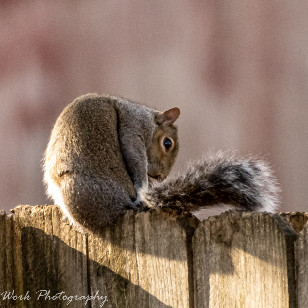 Post your Squirrel pictures-rd5_2252.jpg