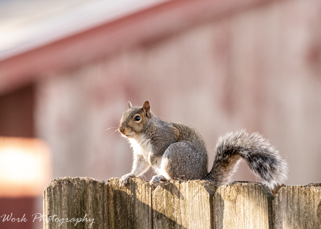 Post your Squirrel pictures-rd5_2256.jpg