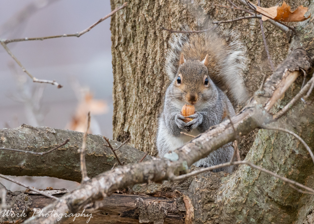 Post your Squirrel pictures-20200120-rd5_2558.jpg