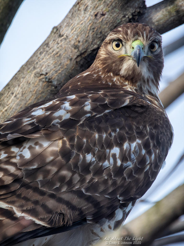 Post your Raptors-_dsc3484-low-res.jpg