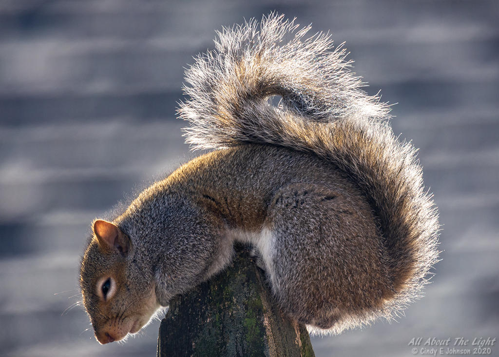 Post your Squirrel pictures-_dsc3499-low-res.jpg