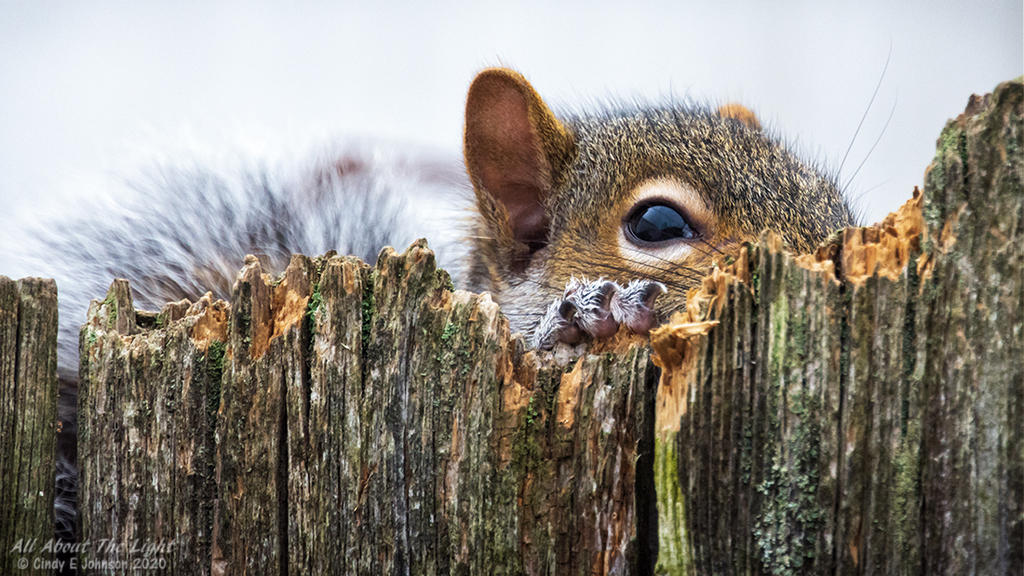 Post your Squirrel pictures-_dsc3697-low-res.jpg