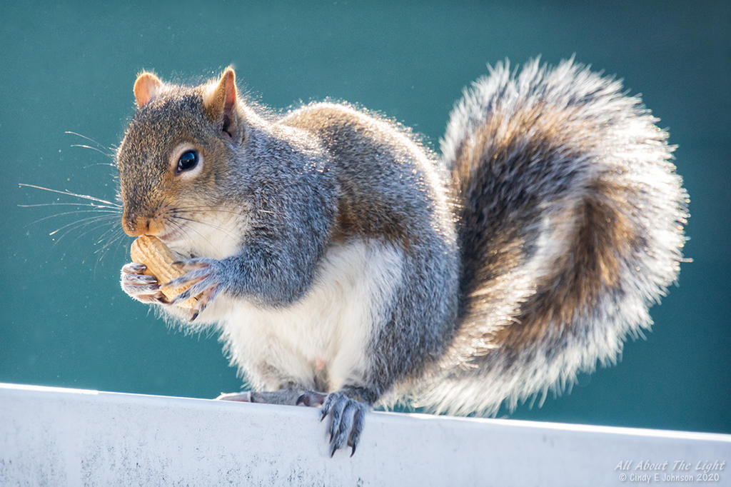 Post your Squirrel pictures-_dsc3884-low-res.jpg