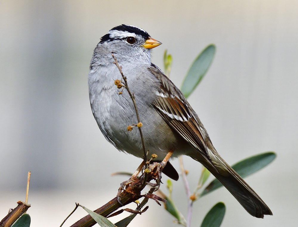Post your birds (2)-_roy6618.jpg