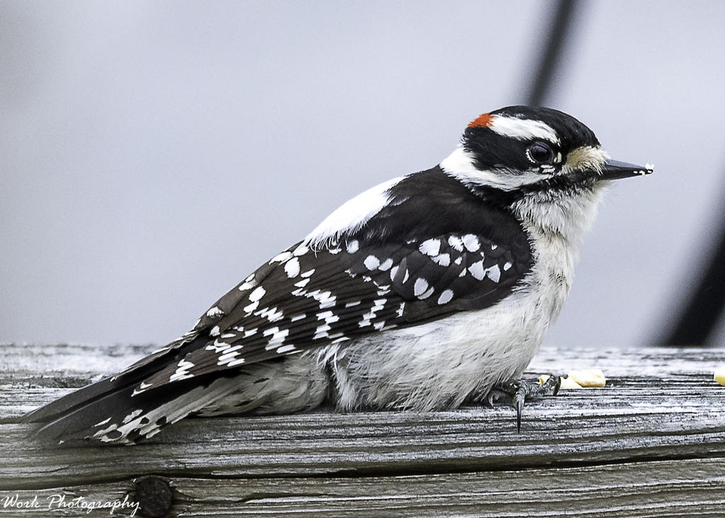 Post your birds (2)-quarantine-shoot-39-61-.jpg