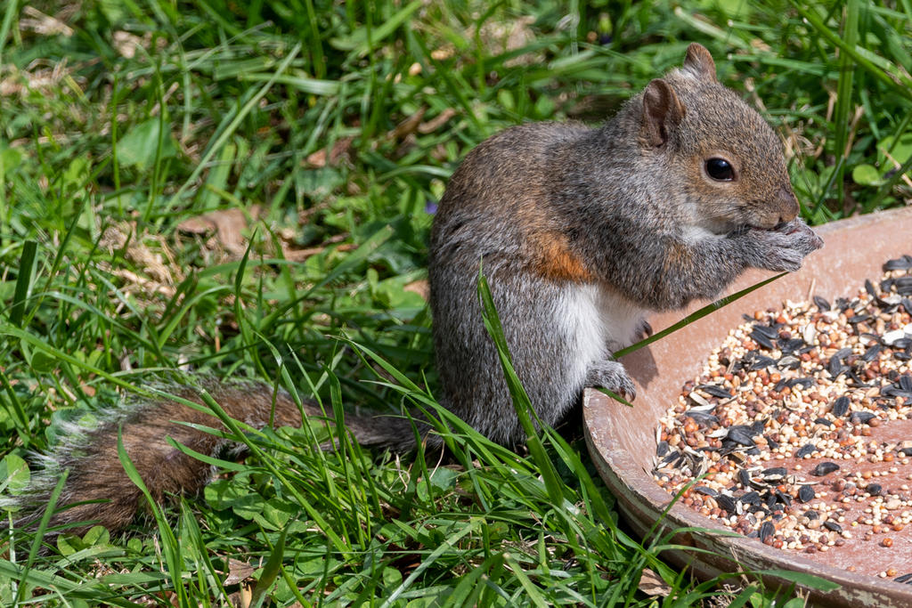 Post your Squirrel pictures-birds-506566.jpg