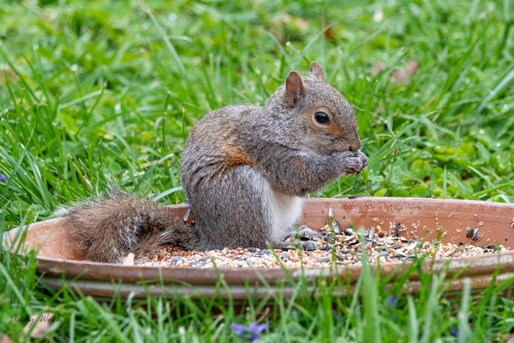 Post your Squirrel pictures-untitled-506852.jpg