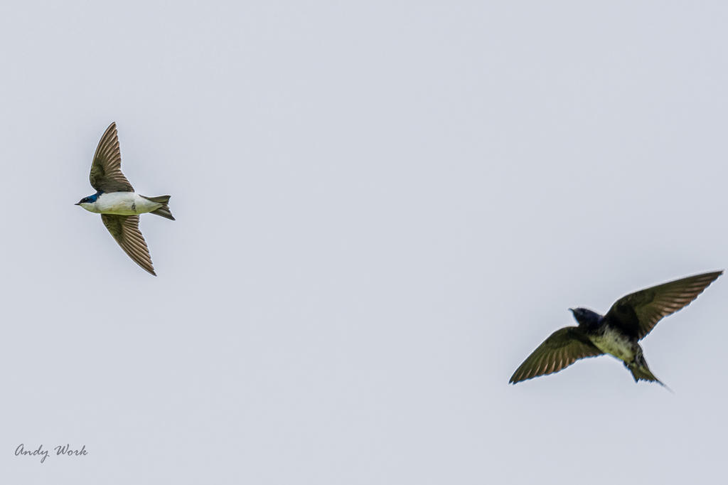 Post your Birds in Flight-untitled-507812.jpg