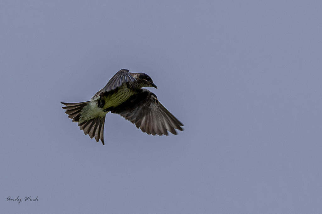 Post your Birds in Flight-untitled-507831.jpg